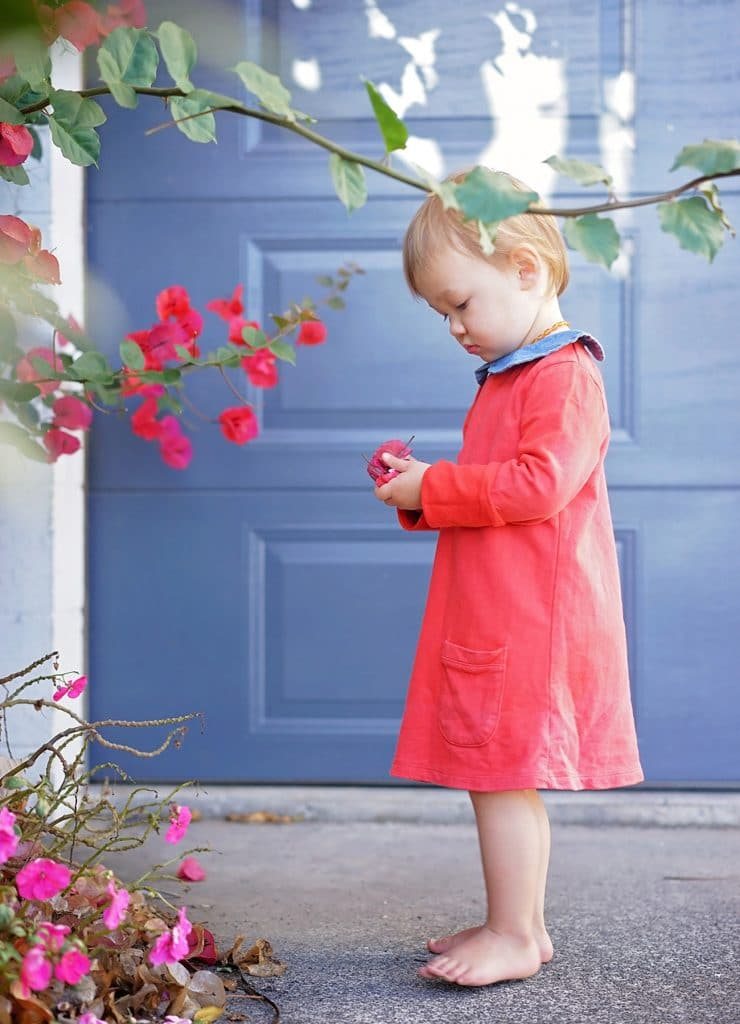 children portrait | a little girl holding and looking at flowers captured by Tauranga children and family photographer Susanna